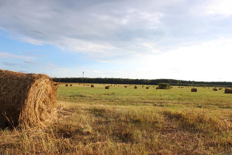 Большое поле у Медвежки