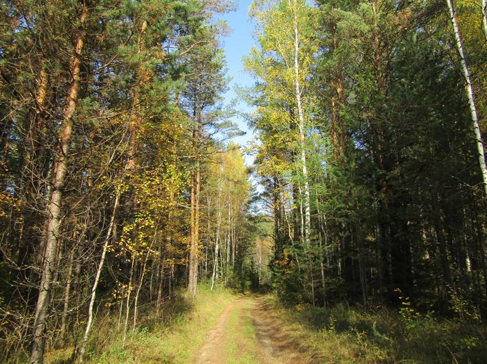 Дорога от Семенинской копи до Парфеновки