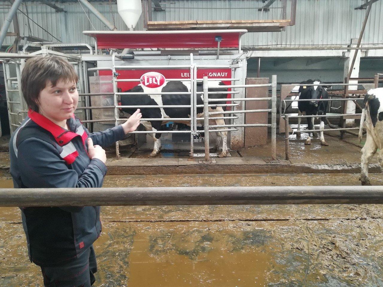 СПК «Глинский»: корова у робота-дояра